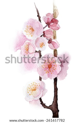 beautiful illustration Hand Painted flower Wild apricot, cherry - stock photo