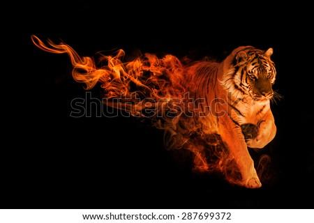 beautiful image of a amur tiger, animal kingdom, amazing tattoo, siberian tiger - stock photo