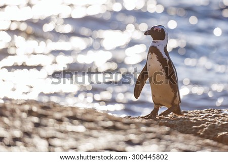 Beautiful image of a lone penguin standing proudly on a large boulder next to the ocean with plenty of copy space on the left - stock photo