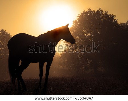 Beautiful image of an Arabian horse silhouetted against rising sun and fog, in rich sepia tone
