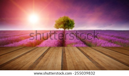 Beautiful image of lavender field Summer sunset landscape with single tree on horizon with sunburst with wooden planks floor - stock photo