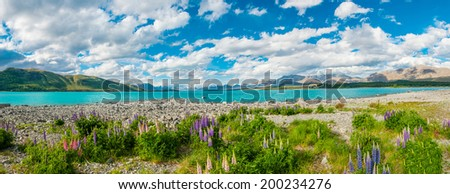 Beautiful incredibly blue lake Tekapo with blooming lupins on the shore and mountains, Southern Alps, on the other side. New Zealand, panoramic photo - stock photo