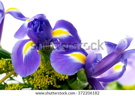 beautiful iris flowers in bouquet  close-up on white background with space for text  - stock photo