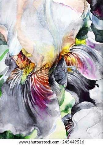 Beautiful iris - watercolor on textured paper. Bright colored petals with a delicate texture. Realistic classic  painting. - stock photo