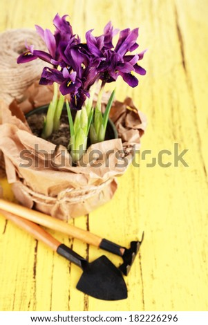 Beautiful irises and gardening tools on wooden table - stock photo