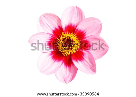 Beautiful isolated flower on white