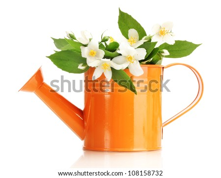 beautiful jasmine flowers with leaves in watering can isolated on white - stock photo