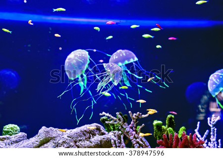 Beautiful jellyfish medusa in the neon light with the fishes. Aquarium - stock photo