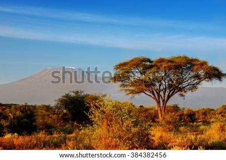 Beautiful Kilimanjaro mountain after sunrise in morning, Kenya, Amboseli national park, Africa  - stock photo