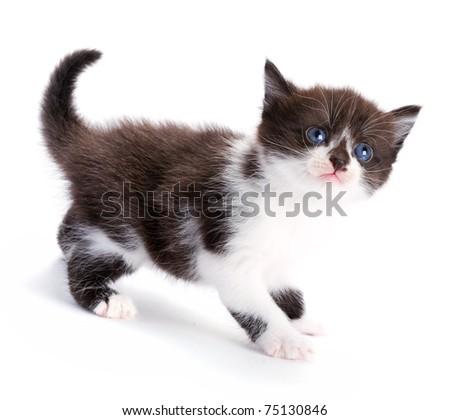 beautiful kitty - stock photo