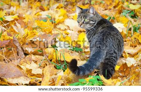 Beautiful kitty on autumn leaves - stock photo