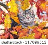 Beautiful kitty sitting on the autumn tree - stock photo