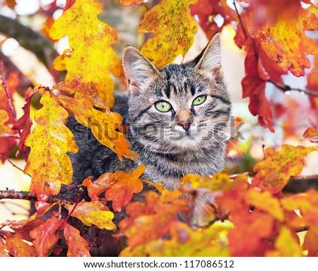 Beautiful kitty sitting on the autumn tree - stock photo