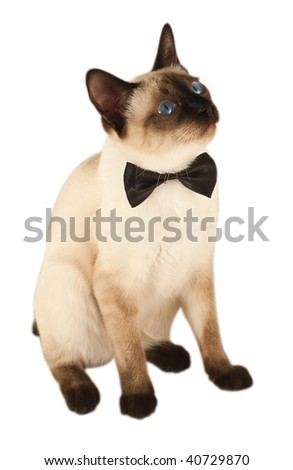 beautiful kitty with a bow on white - stock photo