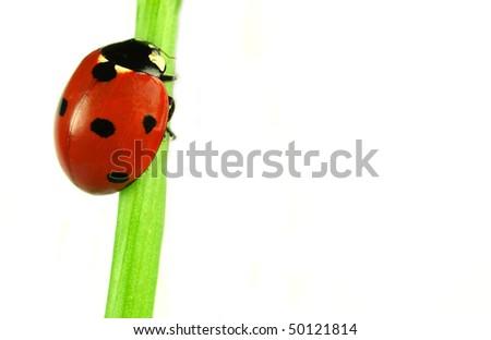 Beautiful ladybug on green leaves - stock photo