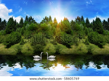 Beautiful lake high in the mountains near the pine trees with a two lovely swans swimming