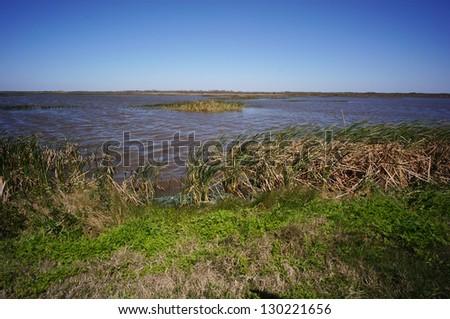 beautiful lake reeds - stock photo