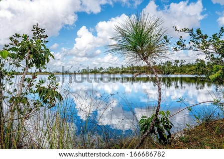 Beautiful lake view landscape in the Florida Everglades National Park - stock photo