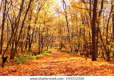 Beautiful landscape - autumn forest - stock photo