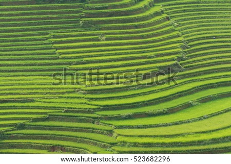 Beautiful landscape Green Terraced Rice Field in Mu cang chai, Vietnam