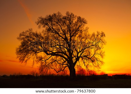 Beautiful landscape image with trees silhouette at sunset - stock photo
