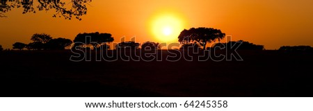 Beautiful landscape image with trees silhouette at sunset - Alentejo, Portugal - stock photo