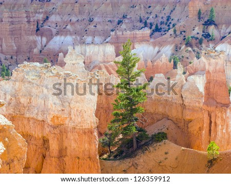 beautiful landscape in Bryce Canyon with magnificent Stone formation like Amphitheater, temples, figures in afternoon ligh - stock photo