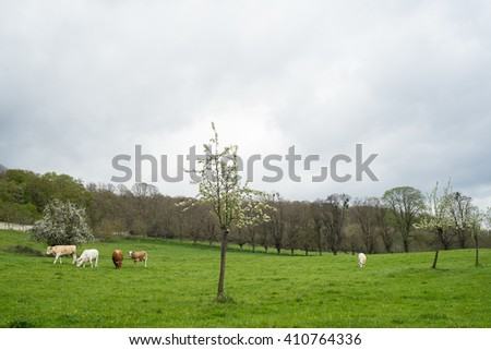 Beautiful landscape in Le Bec-Hellouin, Normandy, France - stock photo