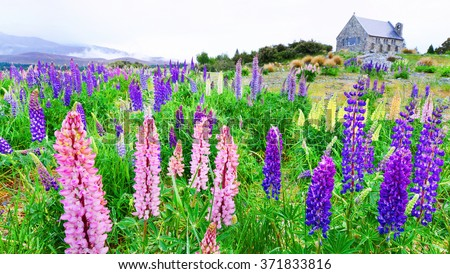 Beautiful landscape lake tekapo, church Good shepherd, Mt.cook, Lupines fields, South island New Zealand - stock photo