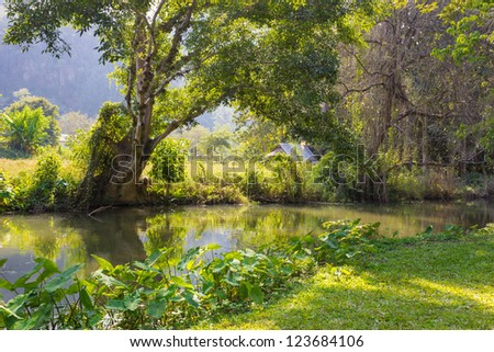 Beautiful Landscape morning in forest Thailand - stock photo