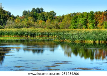 Beautiful landscape of a marsh with green reeds during fall - stock photo