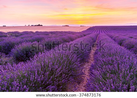Beautiful landscape of lavender fields at sunset near Valensole, Provence-France