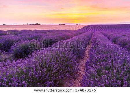 Beautiful landscape of lavender fields at sunset near Valensole, Provence-France - stock photo