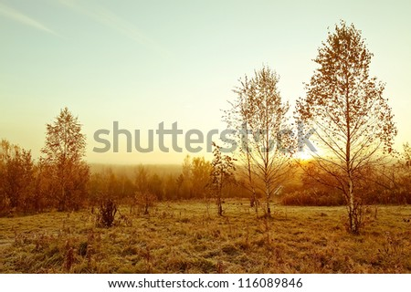 Beautiful landscape of misty meadow in fall