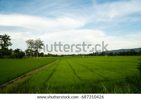 beautiful landscape of organic rice field plantation in Thailand