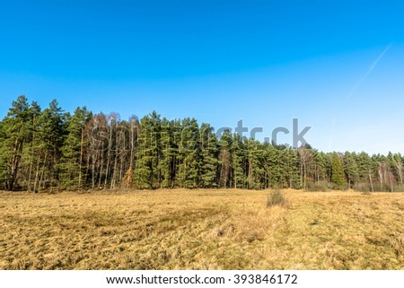 Beautiful landscape of rural field or countryside pasture with dry grass near the coniferous forest at early spring or late winter - stock photo