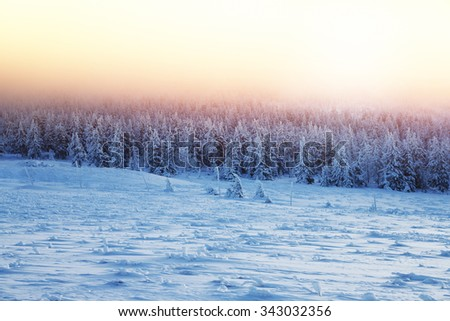 Beautiful landscape of sunset in winter forest, majestic view on a fir trees covered with snow, misty pink sky light over high mountains, wintertime beauty in nature of Czech Republic, Central Europe - stock photo
