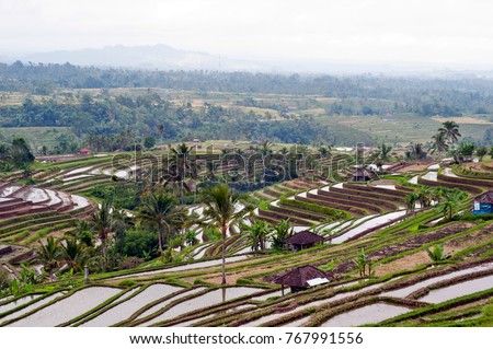 Beautiful landscape of terraced rice fields in Kareng Asem, northeast Bali in Indonesia