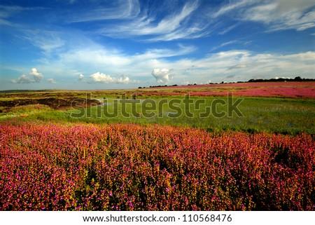 Beautiful Landscape of the flower field - stock photo
