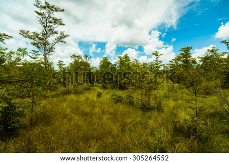 Beautiful landscape of the Grand Cypress Preserve in the Florida Everglades. - stock photo