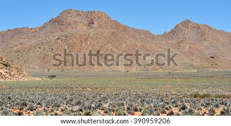 Beautiful landscape of the Namib desert during rainy season, Namibia, Africa