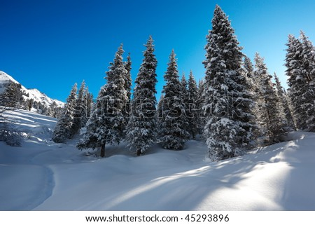 Beautiful landscape of winter wood