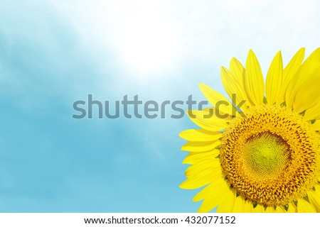 Beautiful landscape sunflower in pastel garden. Abstract blurred on vacation summer soft focus clouds blue sky background. Flowers yellow and green during the daytime with bright sun light. - stock photo