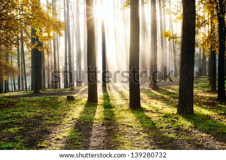 Beautiful landscape, sunrise in the forest - stock photo