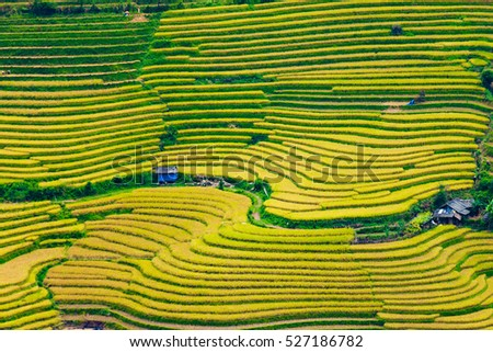 beautiful landscape view of rice terraces in LaoCai (North Vietnam)