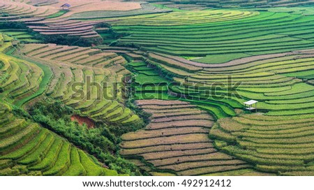 Beautiful Landscape view of Rice terraces in Tu Le, Vietnam