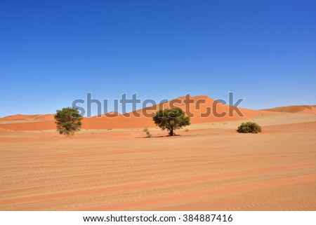 Beautiful landscape with acacia trees and big red dunes at sunrise, Sossusvlei, Namib Naukluft National Park, Namib desert, Namibia - stock photo
