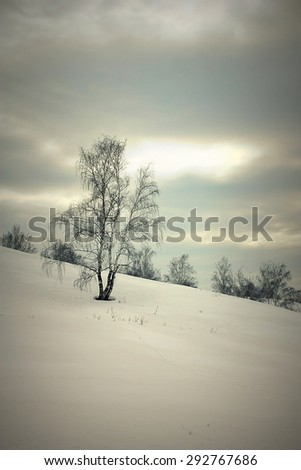 Beautiful landscape with birches on the hill, HDR image - stock photo