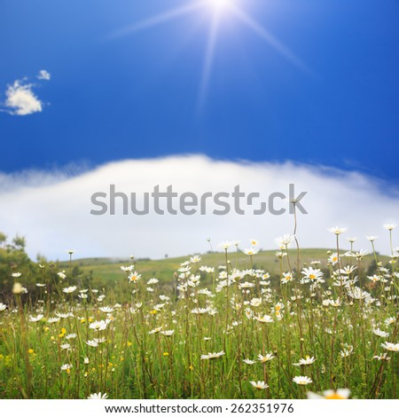 Beautiful landscape with camomile flowers on green grass field under blue cloudy sky and sunlight. - stock photo
