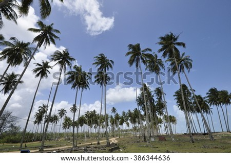 Beautiful landscape with coconut tree at a village.